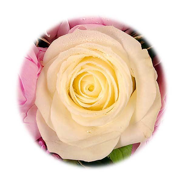 Fleurs pas ch res livraison de fleurs entrefleuristes for Fleurs pas cher livraison