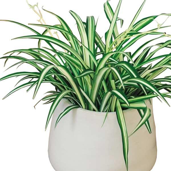 livraison de fleurs pas ch re livrer des fleurs pas ch res entrefleuristes. Black Bedroom Furniture Sets. Home Design Ideas