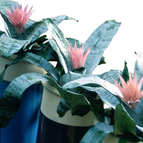 offrir des fleurs domicile livraison de bouquet entrefleuristes. Black Bedroom Furniture Sets. Home Design Ideas