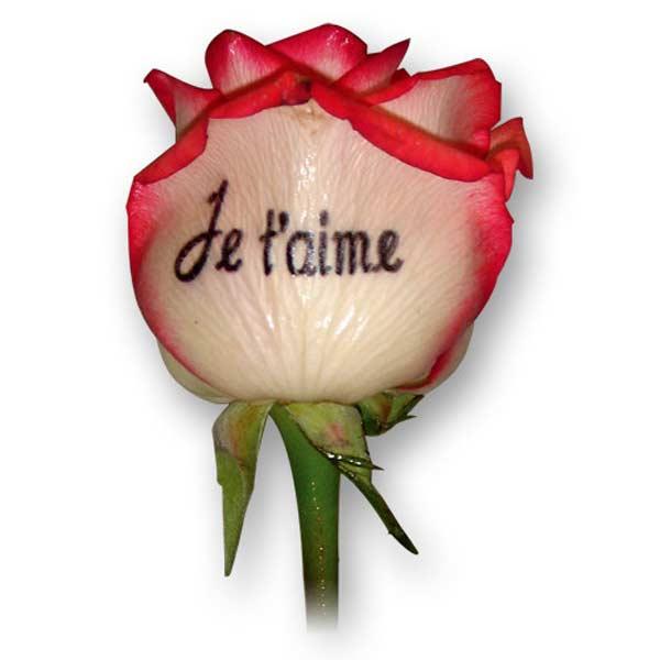 Super Fleurs personnalisées, fleurs imprimées, livraison de fleurs  NG95