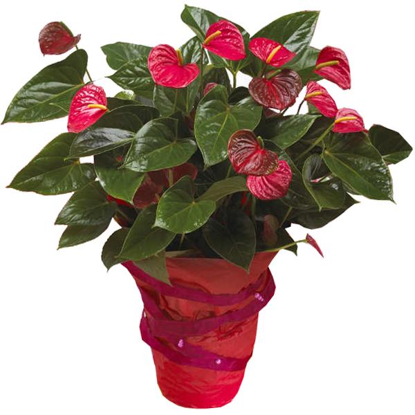 livraison de fleurs grenoble faire livrer des fleurs domicile entrefleuristes. Black Bedroom Furniture Sets. Home Design Ideas