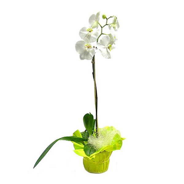 livraison de fleurs marseille livraison de fleurs express entrefleuristes. Black Bedroom Furniture Sets. Home Design Ideas