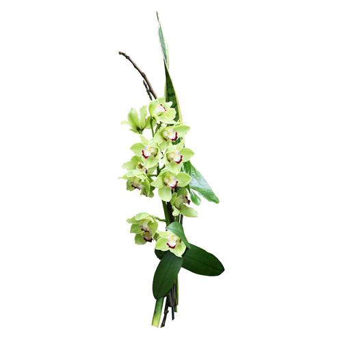 Livraison bouquet lin aire cymbidium entrefleuristes for Livraison fleurs paypal