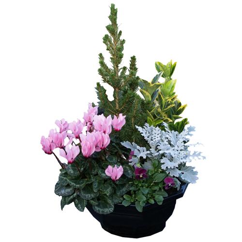 Assemblage de plantes deuil for Plantes exterieur hiver