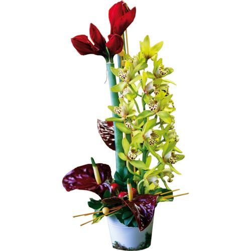 Composition de fleurs exotiques avec amaryllis anthumium for Livraison fleurs paypal