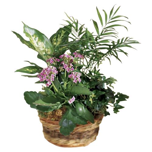 page 1 livraison de plantes vertes livraison de plantes fleuries au bureau et domicile. Black Bedroom Furniture Sets. Home Design Ideas