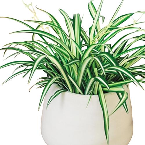 livraison plantes vertes collection design inspiration pour le jardin et son. Black Bedroom Furniture Sets. Home Design Ideas