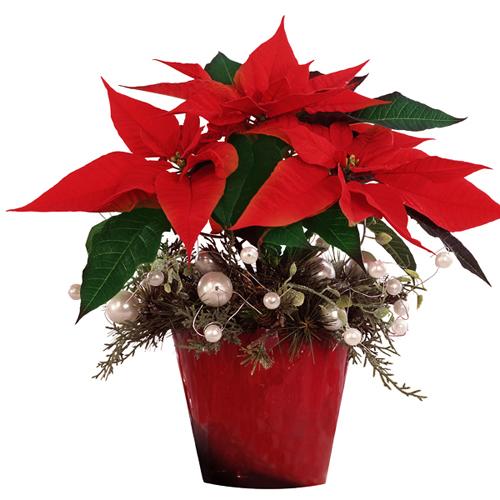 Livraison de fleurs de qualit s par un artisan fleuriste for Fleuriste livreur