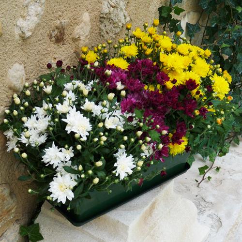 livraison jardini re de chrysanth mes jaune blanc et bordeau pour un deuil livraison par un. Black Bedroom Furniture Sets. Home Design Ideas