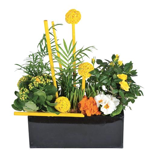 livraison de plantes vertes livraison de plantes fleuries au bureau et domicile. Black Bedroom Furniture Sets. Home Design Ideas