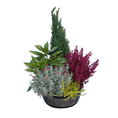 Coupe de plantes ext rieurs pour cimeti re rouge et jaune avec bruy re myrte aucuba et - Fleurs de cimetiere pour l hiver ...