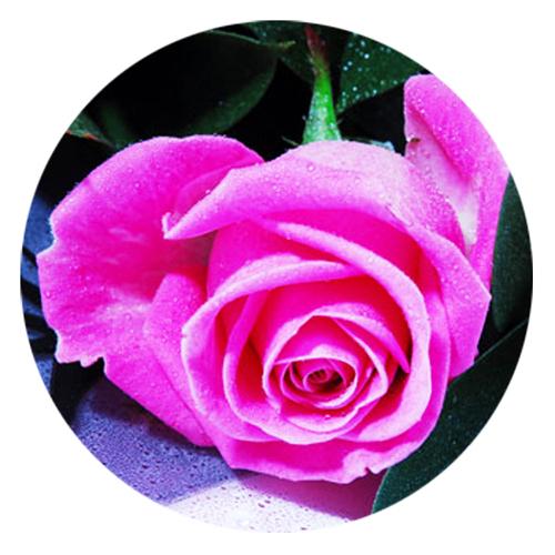 Page 33 tous les produits de entrefleuristes et for Livrer une rose