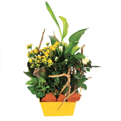 intensit composition de plantes deuil pour cimeti re jaune et blanche avec arum lierre. Black Bedroom Furniture Sets. Home Design Ideas