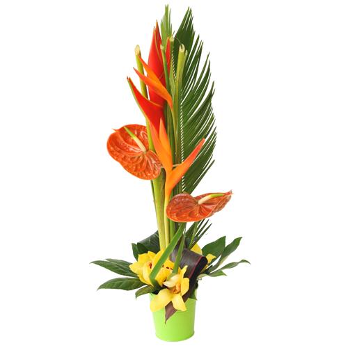 composition fleurs tropicales en hauteur avec strélitzias, cymbidium