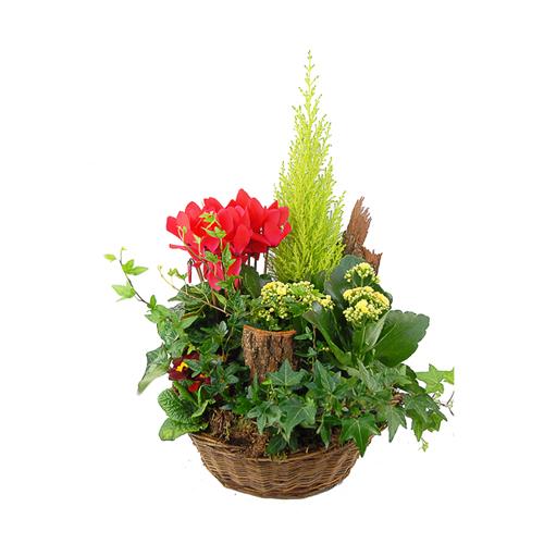 D couvrez nos coupes de plantes deuil quelles soient for Composition florale exterieur hiver