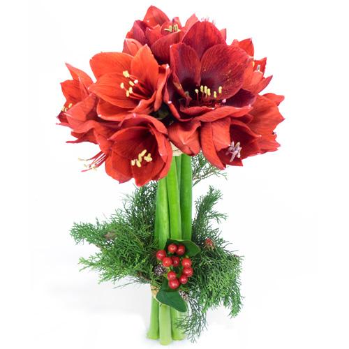 Bouquet d 39 amaryllis rouges livraison de fleurs no l for Amaryllis pour noel