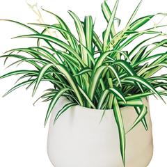 plante verte blanche