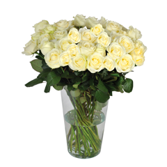 livraison bouquet roses blanches Roses blanches longues tiges