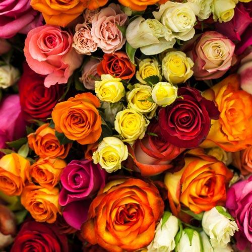 Livraison de bouquets de roses rouges blanches roses for Livraison rose