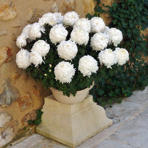 Livraison de plantes et de fleurs pour la toussaint for Service livraison fleurs