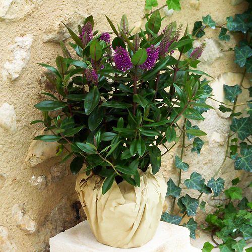 livraison de plantes et de fleurs pour la toussaint. Black Bedroom Furniture Sets. Home Design Ideas